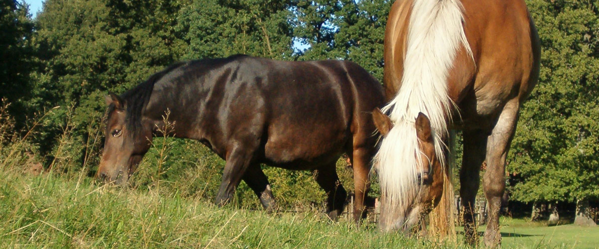 pferde3